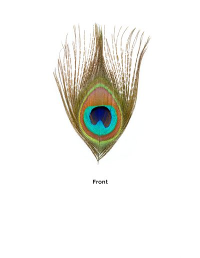 Peacock tail feather eye